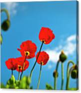 Blue Sky And Poppies Canvas Print