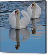 Blue Sky And Two Swans Canvas Print