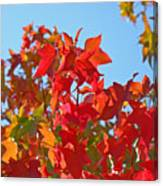 Blue Sky Autumn Art Prints Colorful Fall Tree Leaves Baslee Canvas Print