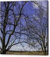 Blue Sky December Canvas Print