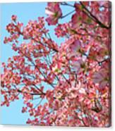 Blue Sky Floral Art Print Pink Dogwood Tree Flowers Baslee Troutman Canvas Print