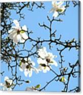 Blue Sky Floral Art White Magnolia Tree Canvas Print