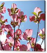 Blue Sky Landscape White Clouds Art Prints Pink Dogwood Flowers Baslee Troutman Canvas Print