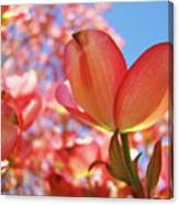 Blue Sky Pink Azalea Dogwood Flowers 4 Landscape Nature Artwork Canvas Print