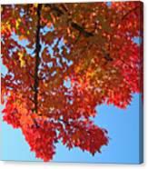 Blue Sky Red Autumn Leaves Sunlit Orange Baslee Troutman  Canvas Print