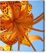 Blue Sky Sunshine Tiger Lily Flowers Giclee Prints Baslee Troutman Canvas Print