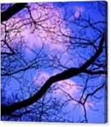 Blue Sky Through The Trees Canvas Print