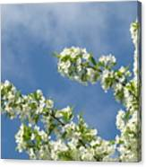 Blue Sky White Clouds Landscape Art White Tree Blossoms Spring Canvas Print