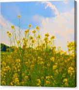 Blue Sky Yellow Flowers Canvas Print