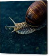 Blue Snail Canvas Print