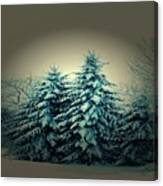 Blue Spruce-maine Evergreens Canvas Print