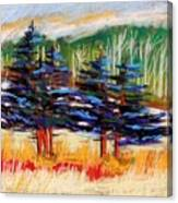 Blue Spruce Stand Canvas Print