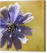 Blue Star #2 Canvas Print