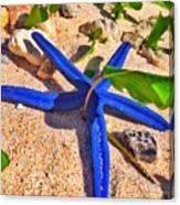 Blue Starfish Canvas Print