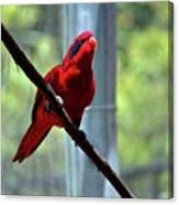 Blue-streaked Lory Canvas Print