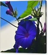 Blue Summer Flower Canvas Print