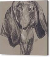 Blue Tick Coonhound Canvas Print