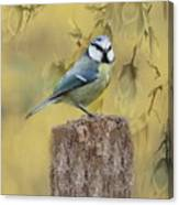Blue Tit Bird II Canvas Print