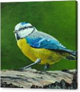 Blue Tit Bird Canvas Print
