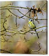 Blue Tit Woods Canvas Print