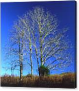 Blue Tree In Tennessee Canvas Print