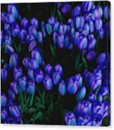 Blue Tulips Canvas Print