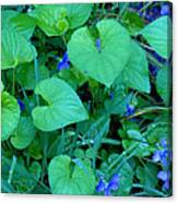 Blue Violets Canvas Print