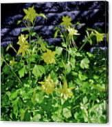 Blue Wall Yellow Columbine Canvas Print