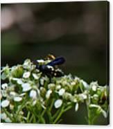 Blue Wasp 1 Canvas Print