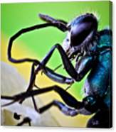 Blue Wasp On Fruit Canvas Print
