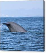Blue Whale Tail Flop Canvas Print