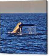 Blue Whales Tail Canvas Print