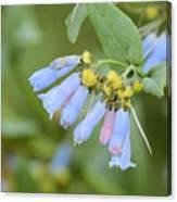 Blue Wild Flower Canvas Print