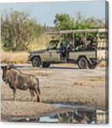 Blue Wildebeest Beside Puddle With Jeep Behind Canvas Print