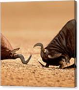 Blue Wildebeest Sparring With Red Hartebeest Canvas Print