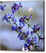 Blue Wildflowers Over Rimrock Lake Canvas Print