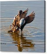 Blue Winged Teal 2 Canvas Print