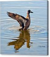Blue Winged Teal 3 Canvas Print