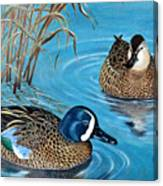 Blue-winged Teals Canvas Print