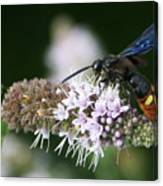 Blue-winged Wasp On Mint Canvas Print