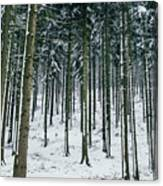 Blue Winter Forest Canvas Print