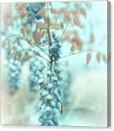 Blue Wisteria Canvas Print