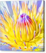 Blue Yellow Lily  Canvas Print