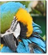 Blue/yellow Parrot Canvas Print