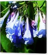 Bluebell 21 Canvas Print