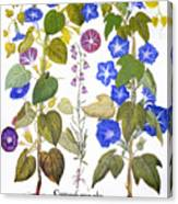 Bluebell And Morning Glory Canvas Print
