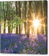 Bluebell Dawn Canvas Print