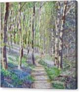 Bluebell Walk At Llanilar Aberystwyth Canvas Print