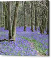 Bluebell Wood Effingham Surrey Uk Canvas Print