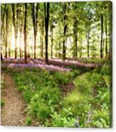 Bluebell Woods With Birds Flocking  Canvas Print